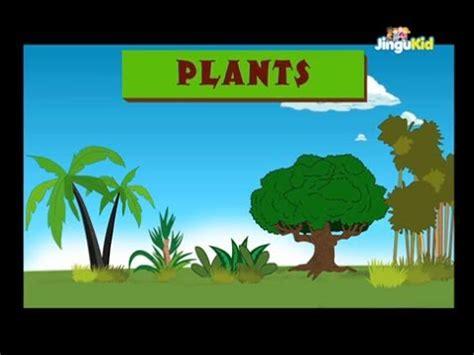 Importance of trees plantation essay